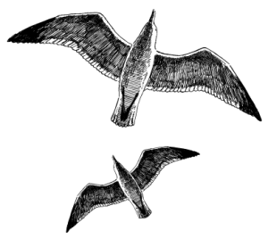 birdsweb