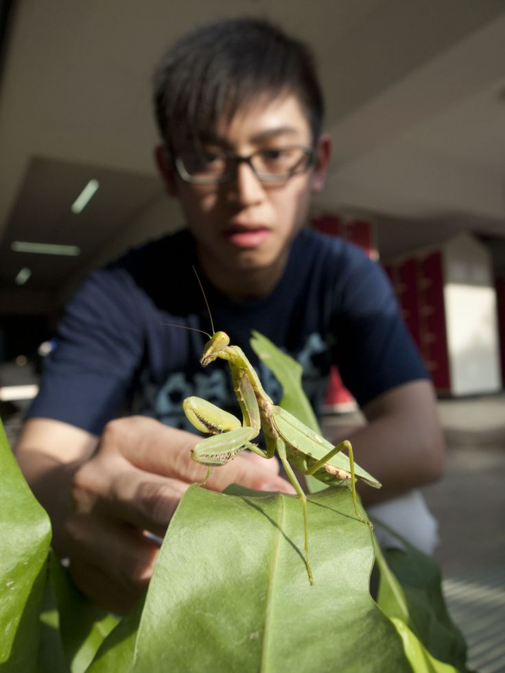 Biodiversity is everywhere, even in school! This friendly mantis was found loitering in the plants next to the lockers.