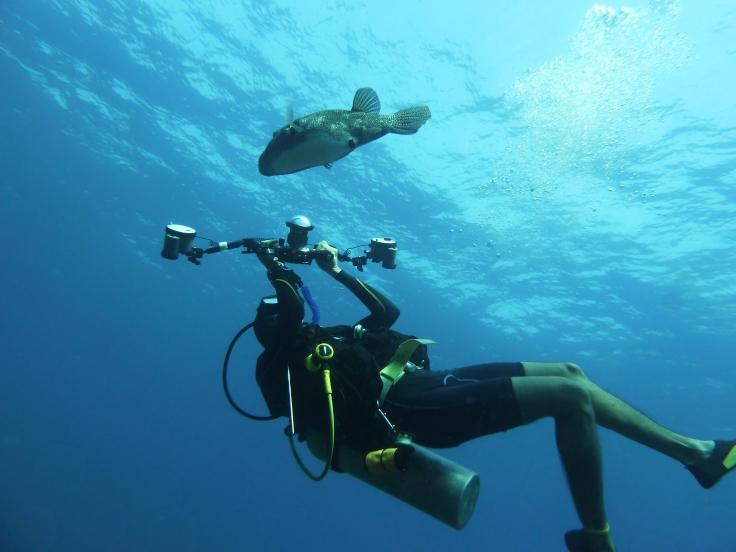 In his underwater element